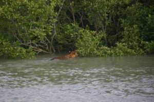Forest Of Sunderban
