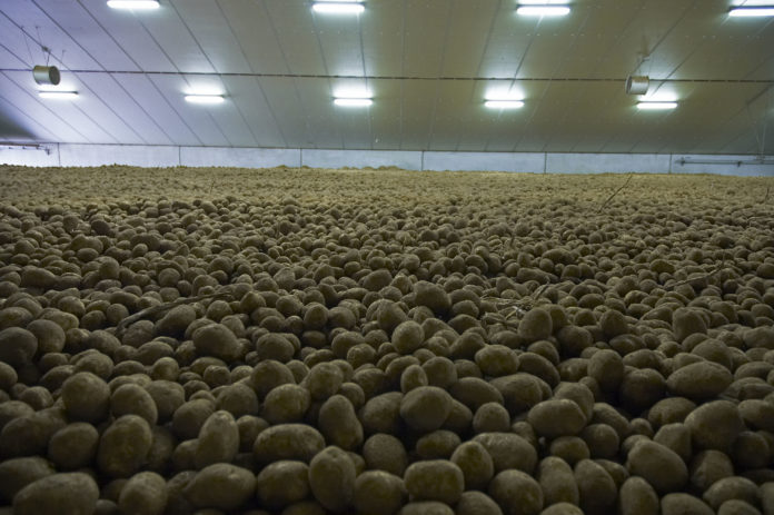 Potato - Cold Storage