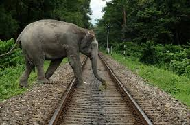Elephants on Rail Track