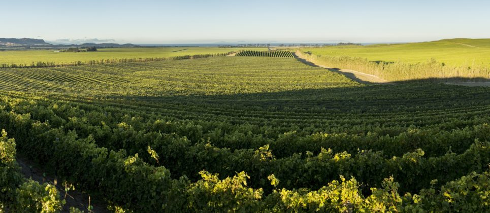 Awatere Valley Marlborough - vines run to the edge of the Pacific Ocean