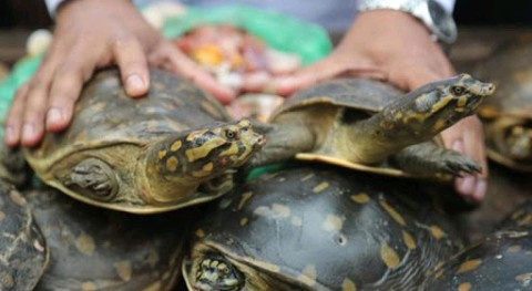 Tortoise illegal sale at South Dinajpur