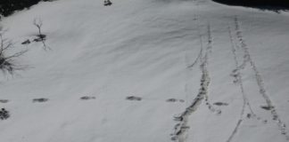 Yeti Foot Print by Indian Army