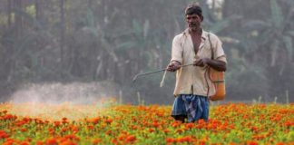 Horticulture of Marigold
