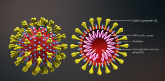 3D_medical_animation_corona_virus Photo by Wikipedia