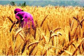 FCI ensures uninterrupted food grain supplies across the country during the lockdown due to COVID-19 outbreak
