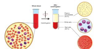 Exploring novel blood plasma therapy for COVID-19