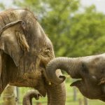 Baby and Mother - Elephant family