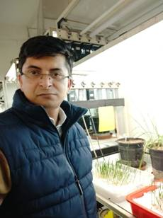 INSPIRE Faculty fellow's engineering to produce heat-tolerant wheat varieties resulting in improved grain yield