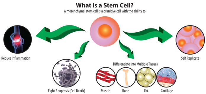 What Is A Stem Cell Photo Credit : www.tsaog.com