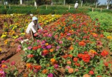 Horticulture - West Bengal