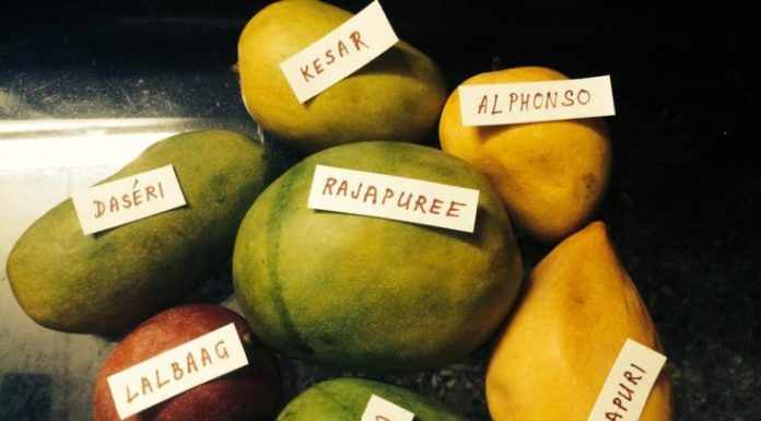 Mangoes - Bengal's Delight