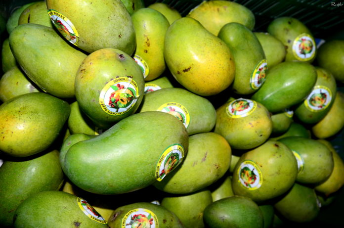 MANGO FESTIVAL IN KOLKATA, CITY CENTRE 1