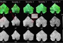 Imaging Technology to Identify Medicinal Plants