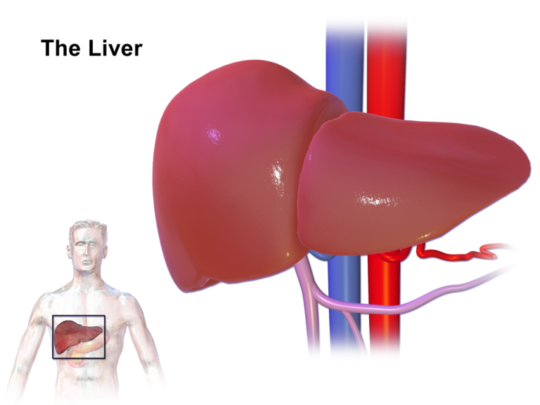Medica Superspecialty Hospital has conducted a deceased donor Liver Transplant at Kolkata