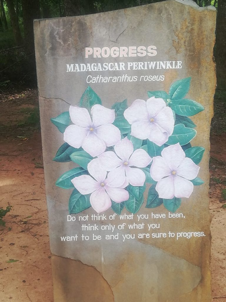 Auroville at Pondicherry